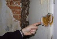 la-traque-de-la-merule-champignon-destructeur-dans-la-maison
