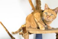 Construire soi-même un arbre à chat