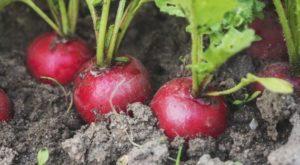 que planter et semer en avril dans le jardin